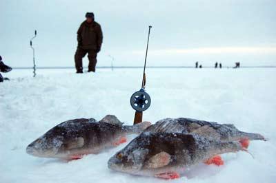 прогноз клева рыбинское брейтово